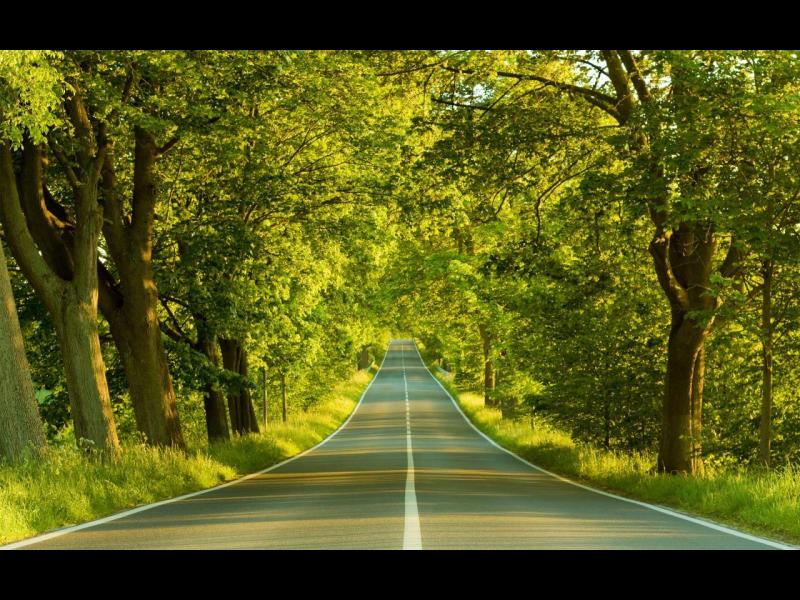 Forest Road Download Backgrounds