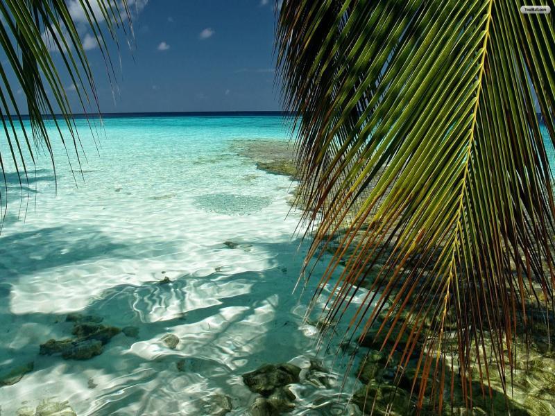 Free Desktop Tropical Frame Backgrounds