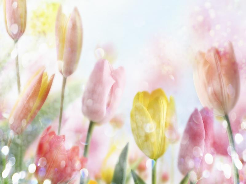 Garden Graphic Backgrounds