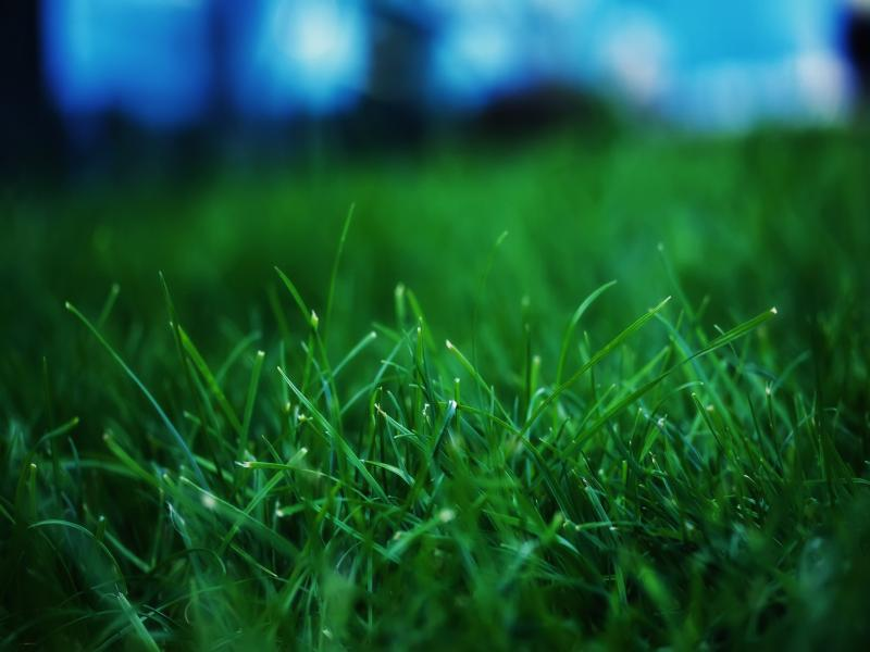 Grass  Green  Fanpop Presentation Backgrounds