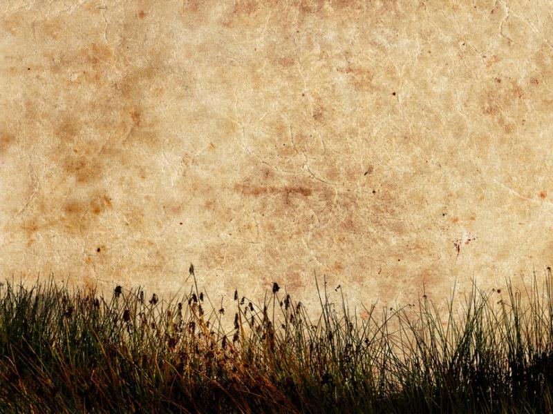 Grass Textured Download Backgrounds