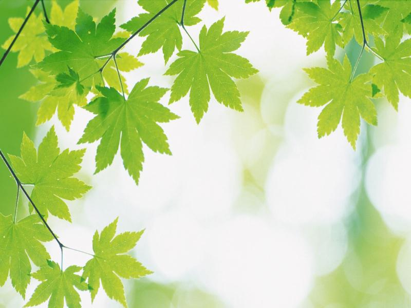Green Leaves and Green Leaf Backgrounds