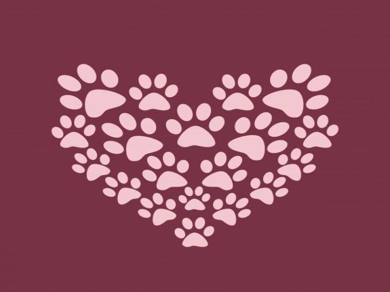 Heart Paw Print Backgrounds