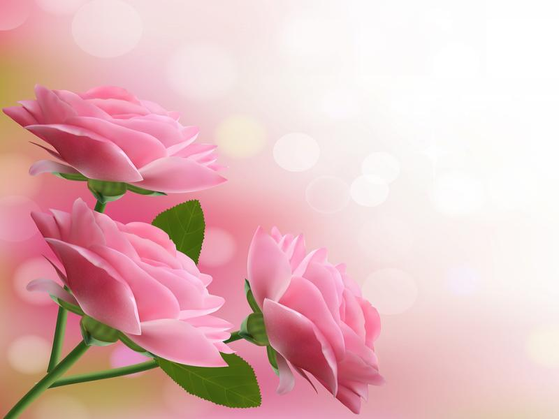 Holiday With Pink Beautiful Flowers Photo Backgrounds