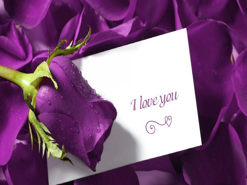 I Love You Purple Rose Art Backgrounds