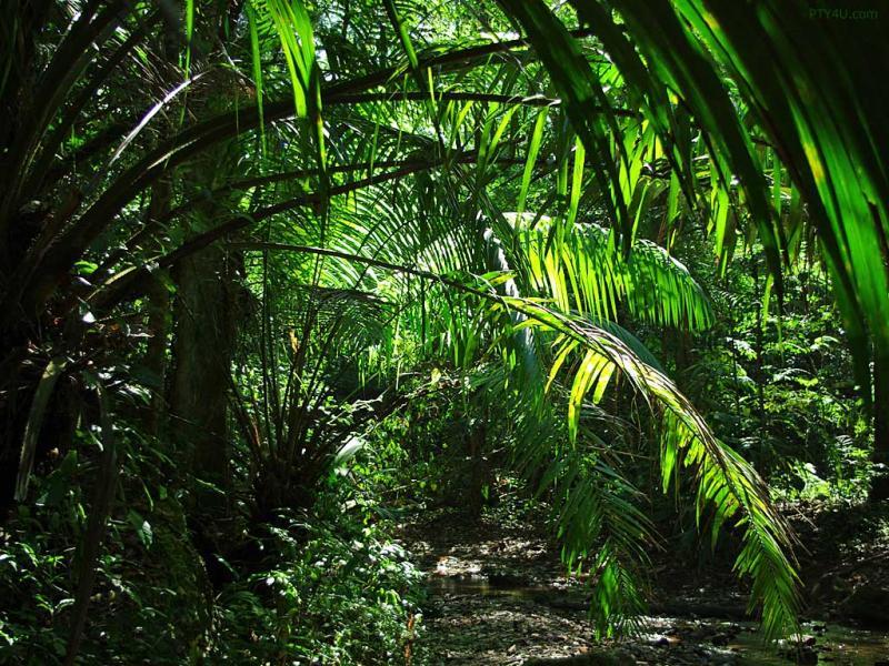 JUNGLE  Kailiauk Island Gorean Home Wiki  Fandom Powered By Wikia Backgrounds