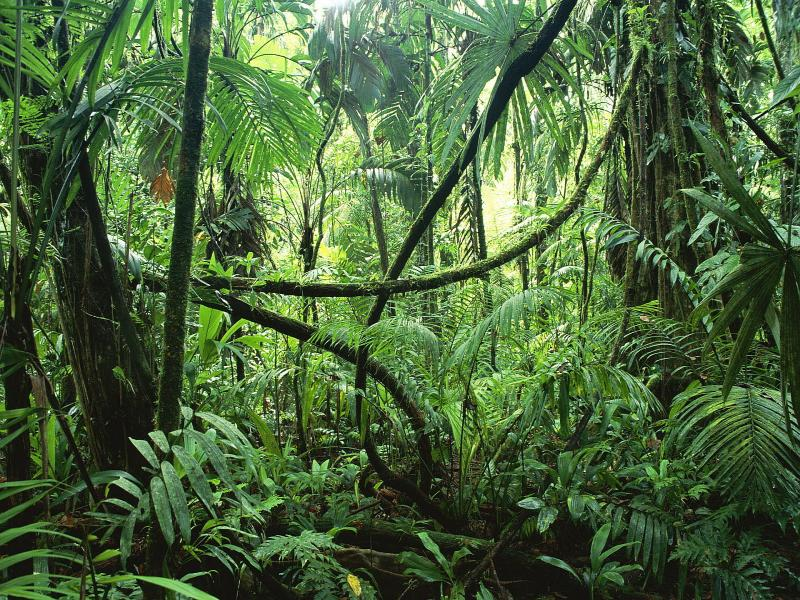 Jungle Forests Pictures Photos Images Photo Backgrounds