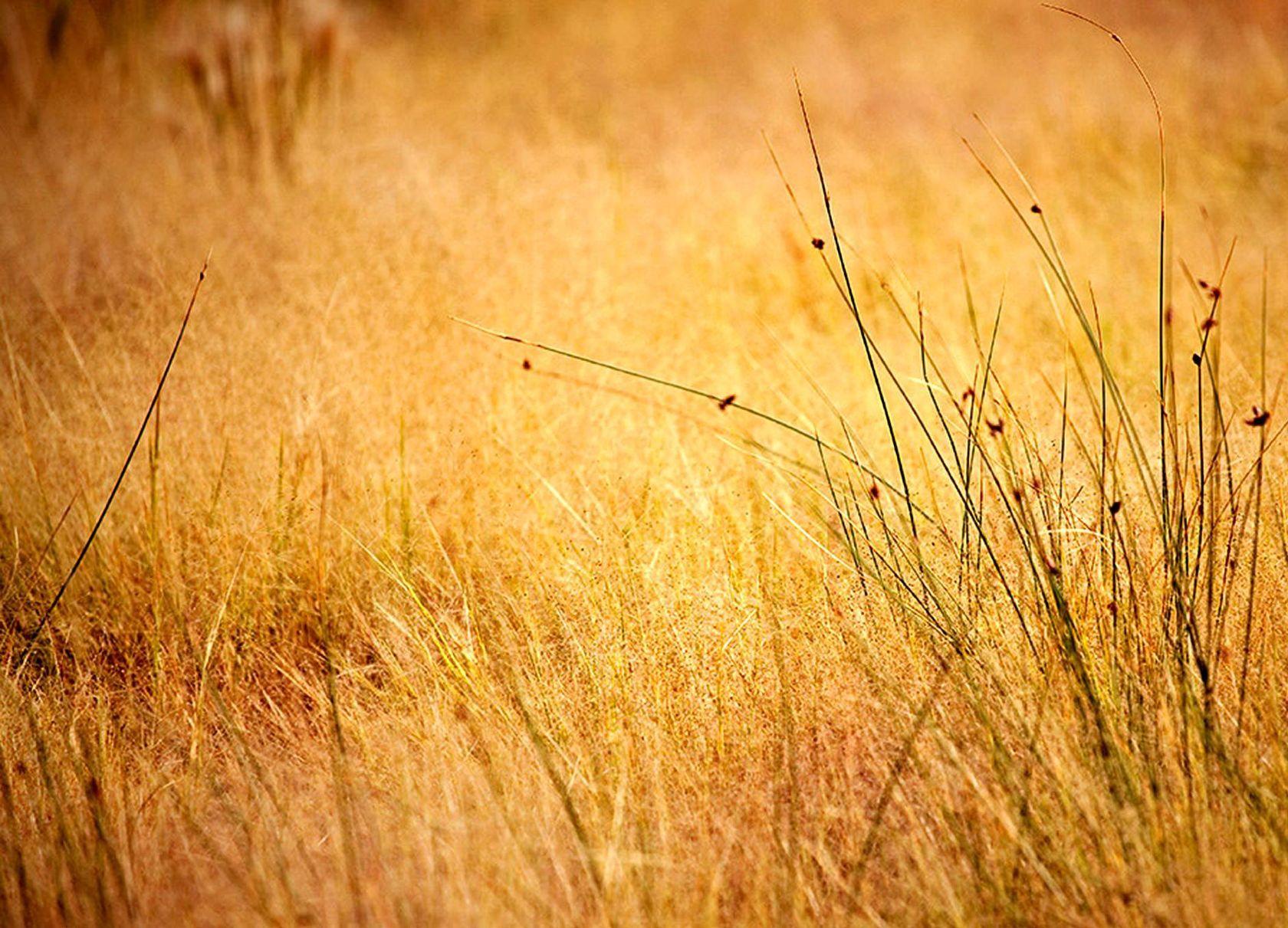 Land Natural Western Backgrounds