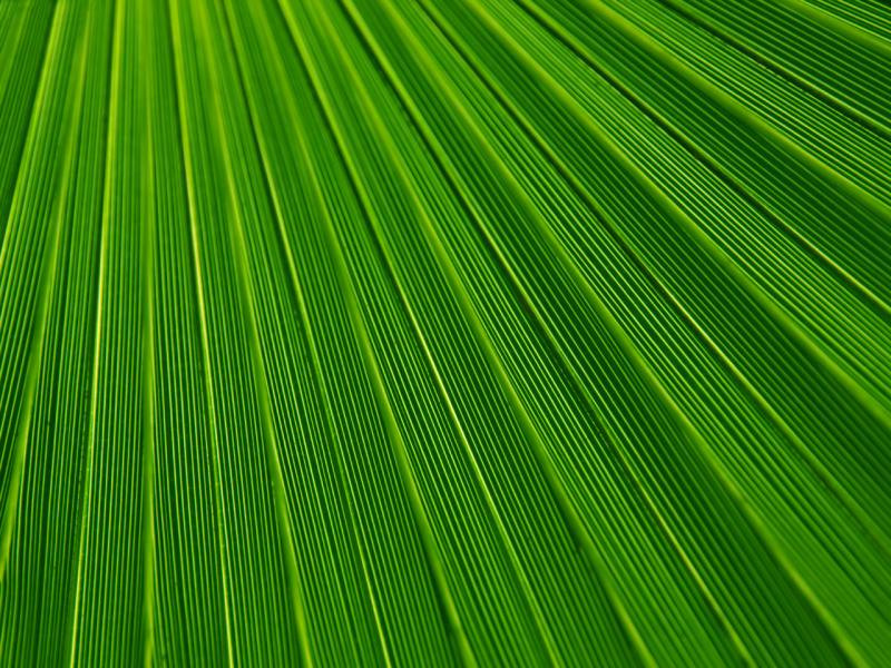Leaf Green Texture Photo Green  Design Backgrounds