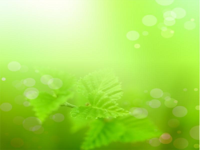 Light Green For High Light Green image Backgrounds