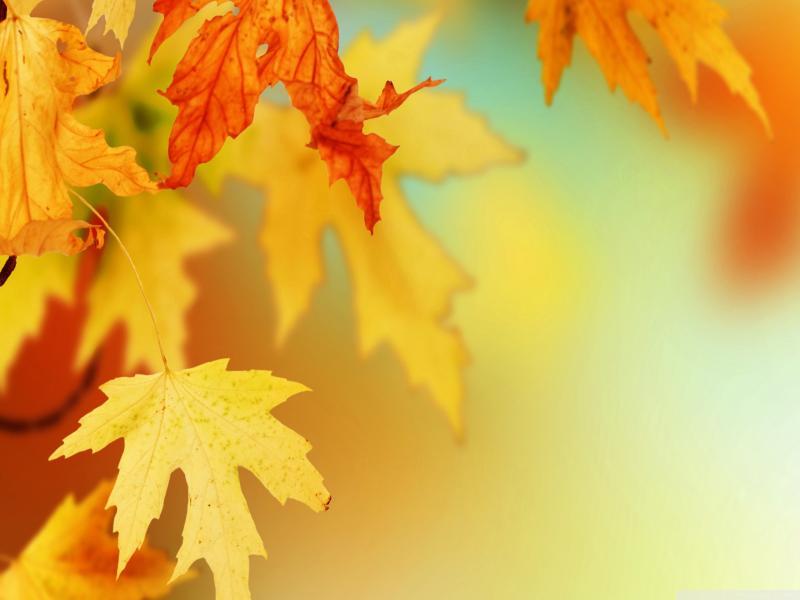 Light Leaves Wallpaper Backgrounds