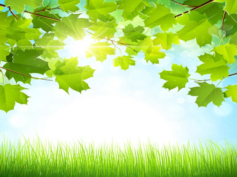 Nature Frame Backgrounds For Powerpoint Templates