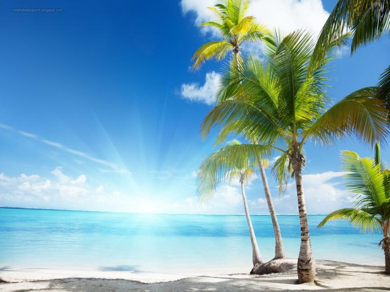 Palm Tree Hd Download Backgrounds