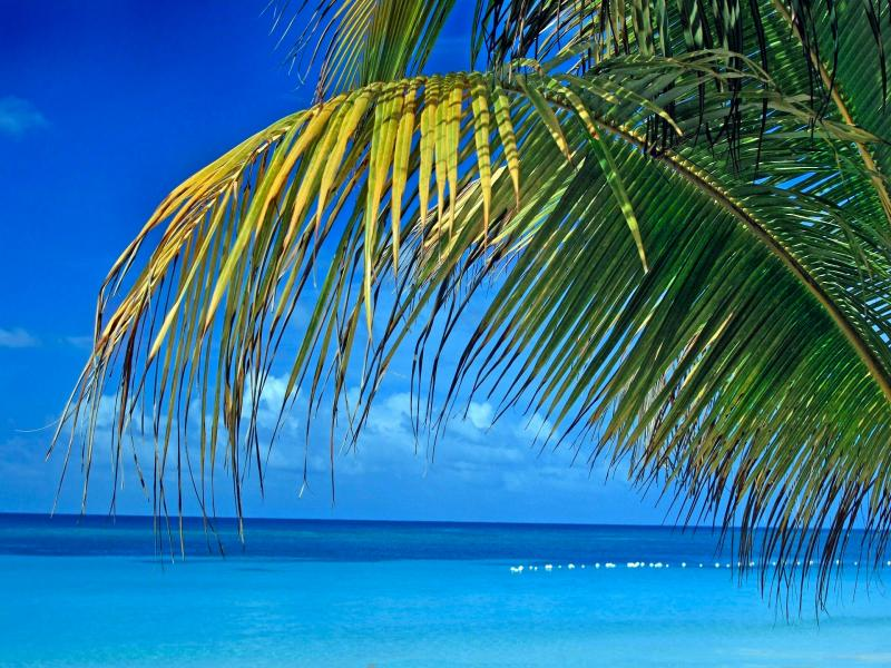 Palm Tree Leaves and Blue Tropical Picture Backgrounds