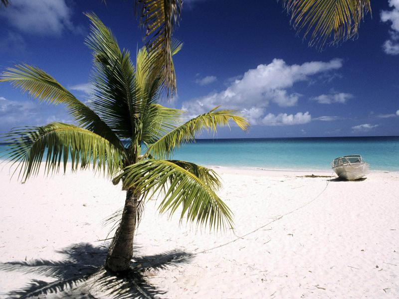 Palm Trees Picture Wallpaper Backgrounds