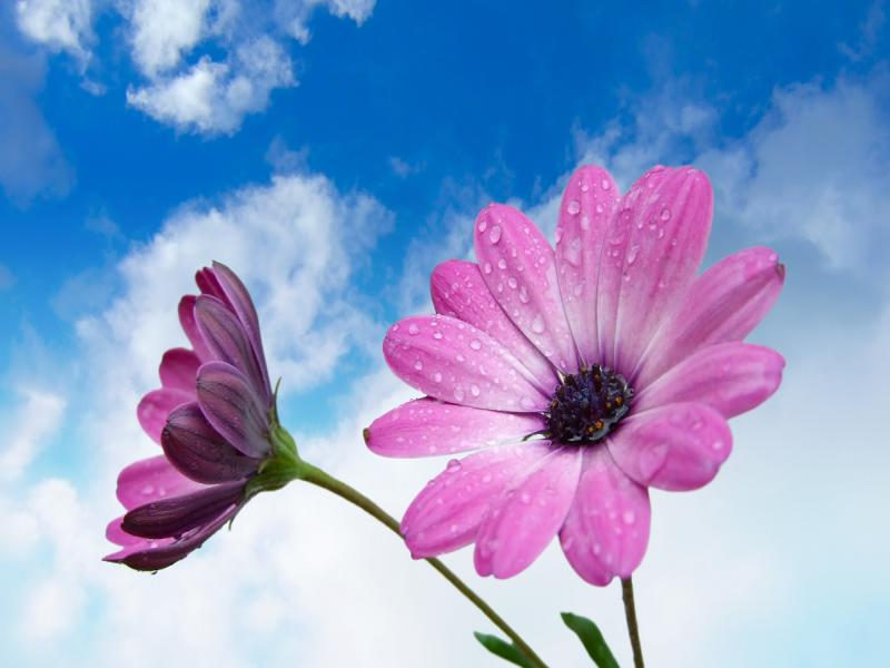 Photography Flowers Flower Photos Backgrounds