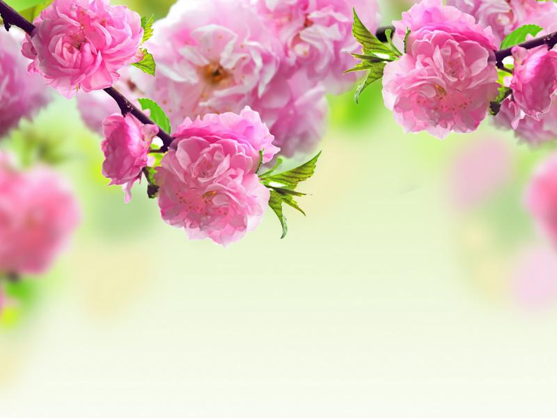 Pink Flowers Mother Day Walpaper Clipart Backgrounds