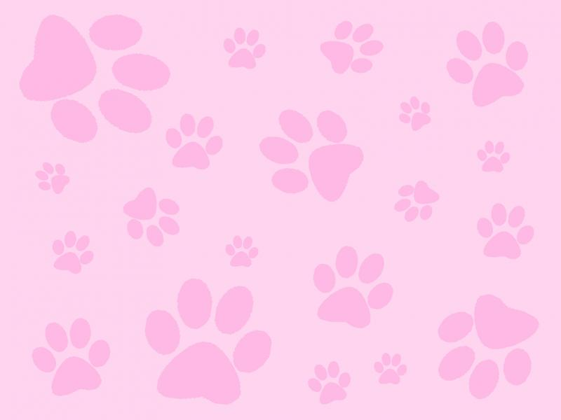 pink paw print pink paw print pink backgrounds for