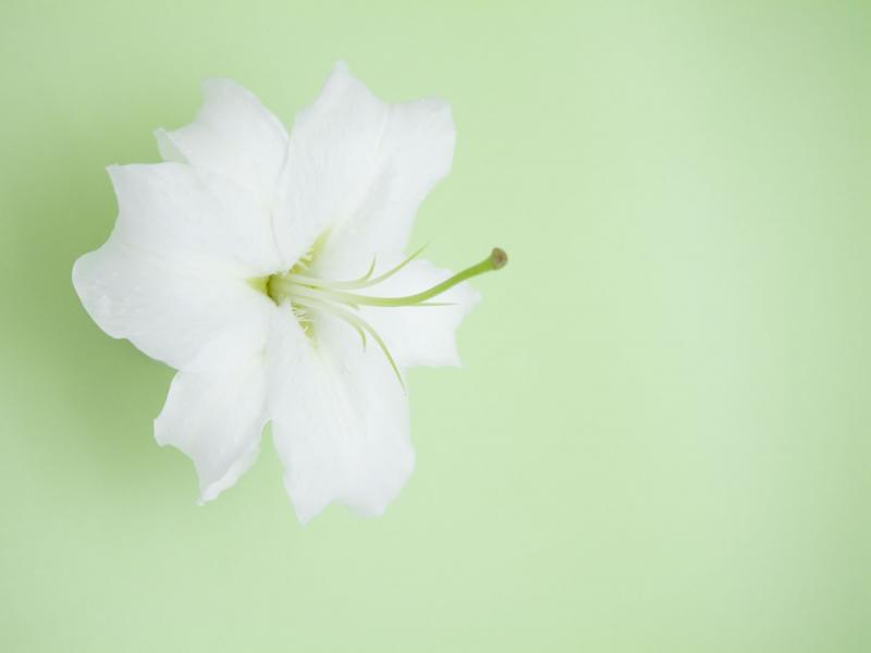 PowerPoint Designs  Nice Flower Lily Themes   Picture Backgrounds