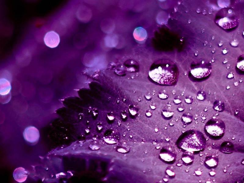 Purple Leaf Water Drops Art Backgrounds