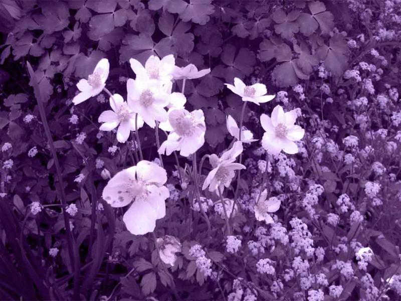 Purple Mothers Day Backgrounds