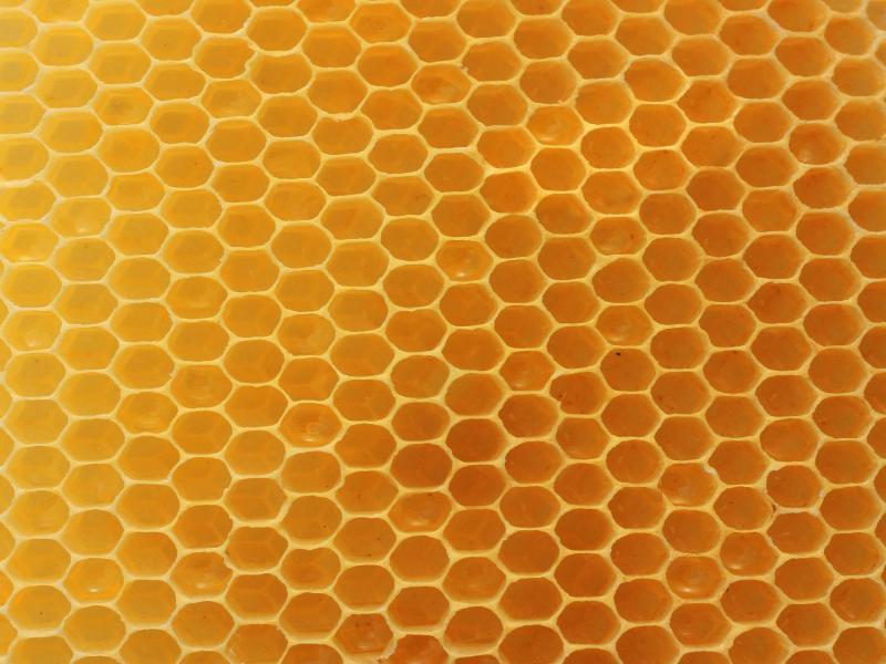 Real Honeycomb Backround Frame Backgrounds