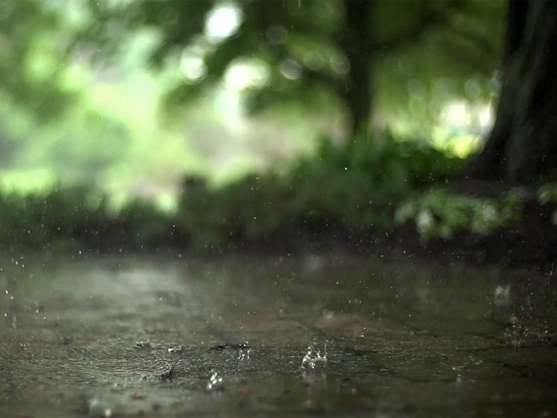 Real Raindrops Backgrounds
