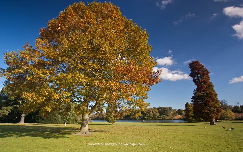 Romantic Tree Hd Backgrounds