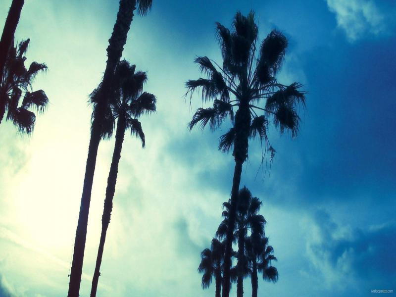 Sky Face Palm Tree Download Backgrounds