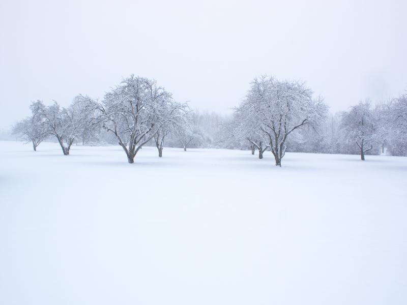 Snow Image Picture Cool Walldiskpaper Design Backgrounds