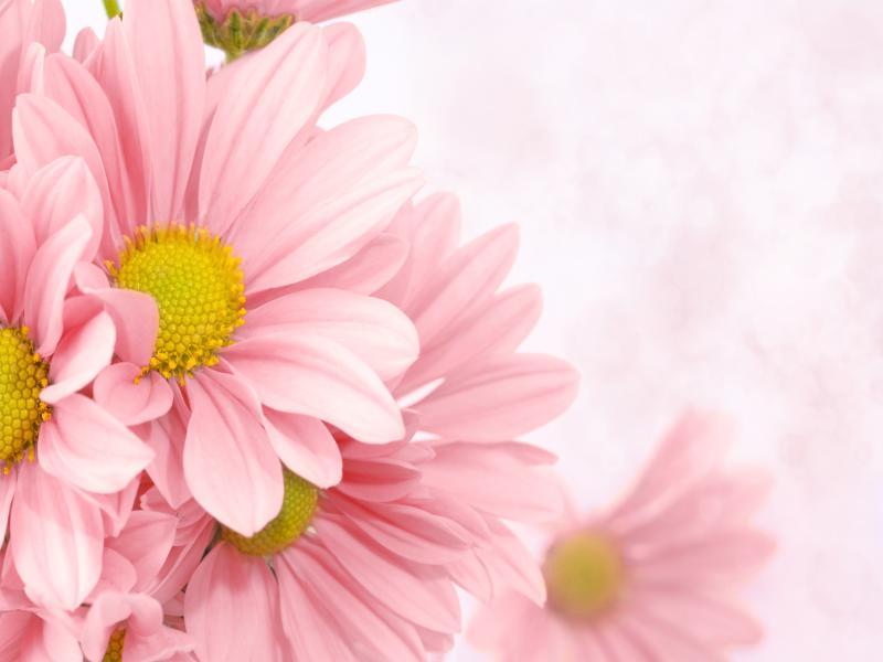 Soft Pink Floral Frame Backgrounds