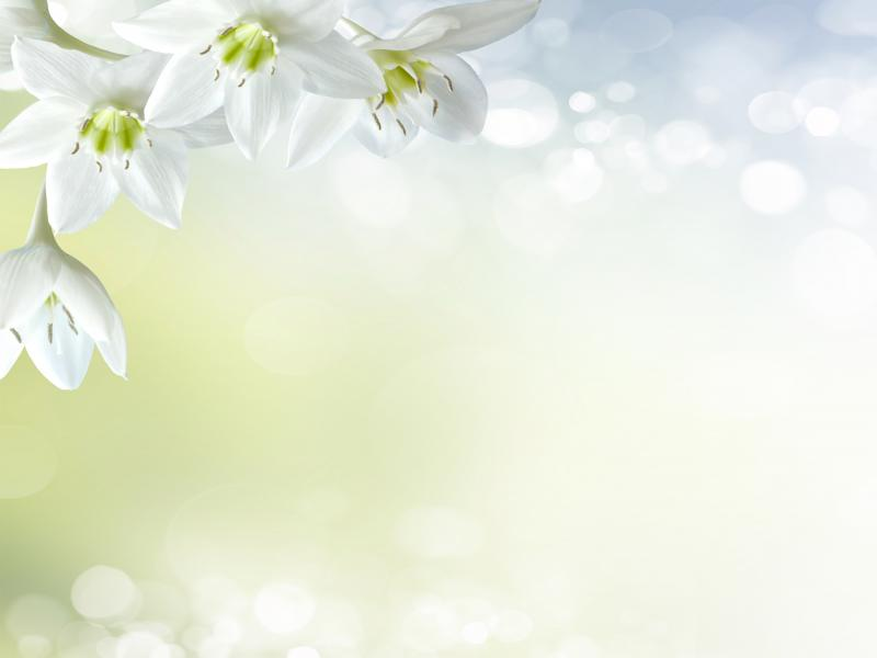 Soft White Floral image Backgrounds