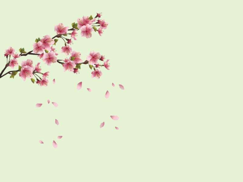 Spring flowers flowers backgrounds for powerpoint templates ppt spring flowers flowers backgrounds mightylinksfo