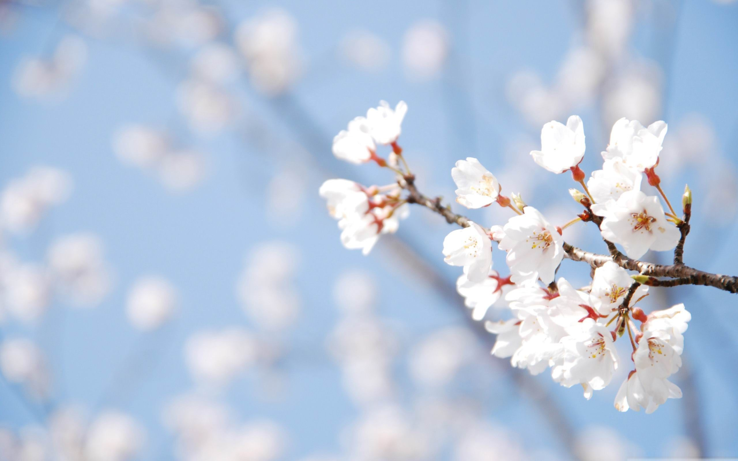 Spring Image Backgrounds For Powerpoint Templates Ppt Backgrounds