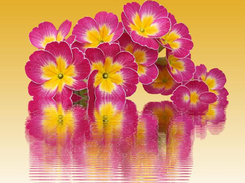 Spring Nice Flower Backgrounds