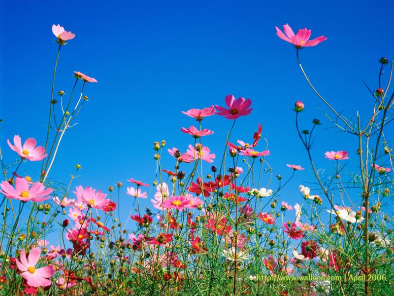Spring Backgrounds For Powerpoint Templates