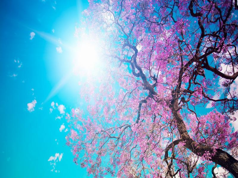 Springs  Bests Graphic Backgrounds