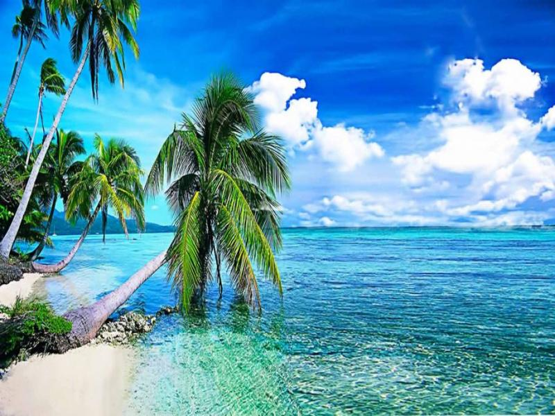 Summer Tropical Beach With Palmi Backgrounds