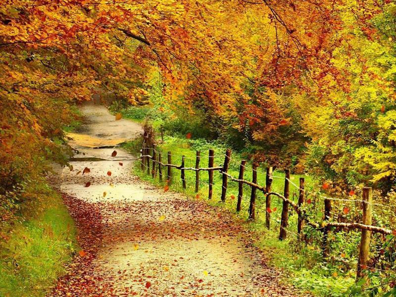 Tag Beautiful Autumn ScenerysBackgrounds Photos Images   Photo Backgrounds