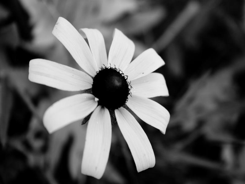 Wallpaper Flower Black And White Background