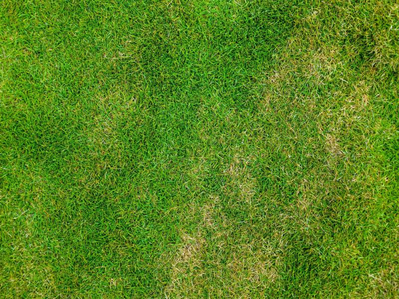 Top Down Grass Texture Or Green Lawn Photo Image