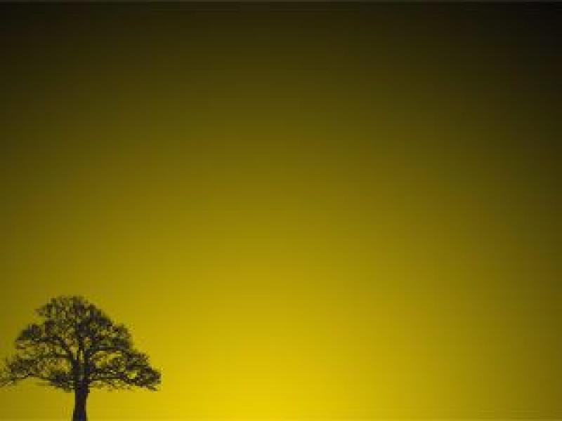 Tree Sunset Template PPT Template Backgrounds