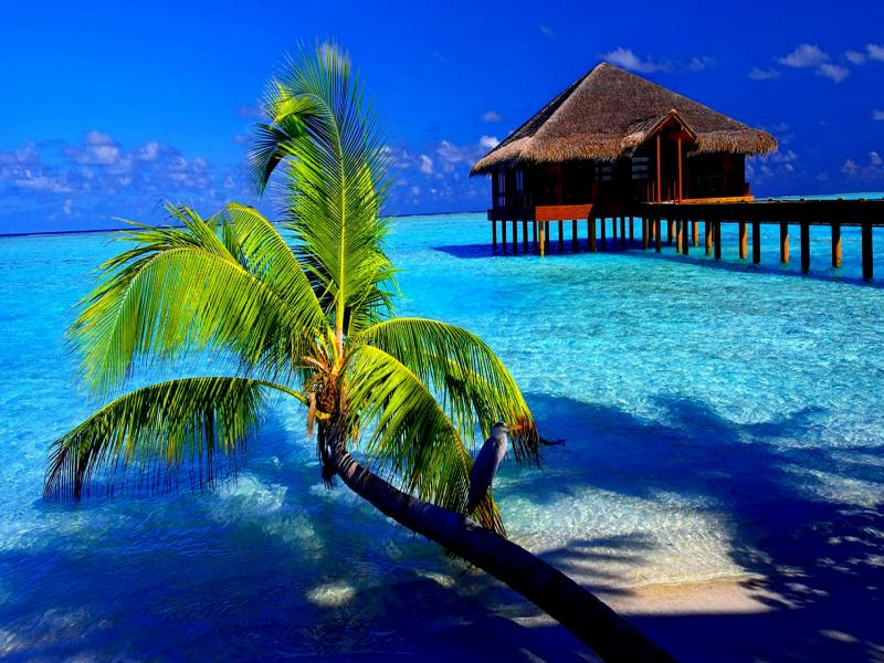 Tropical  Latest Hds Quality Backgrounds