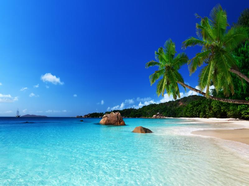 Tropical Beach Design Backgrounds