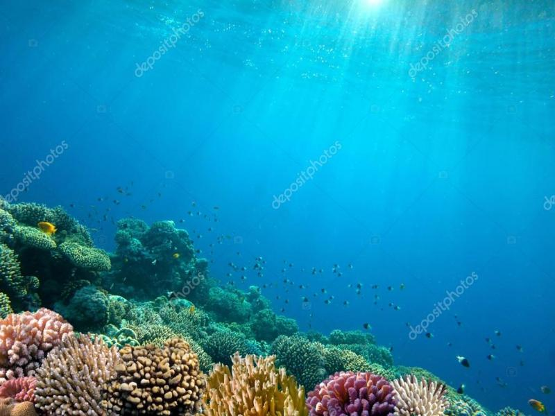 Underwater Ocean Floor Art Backgrounds For Powerpoint