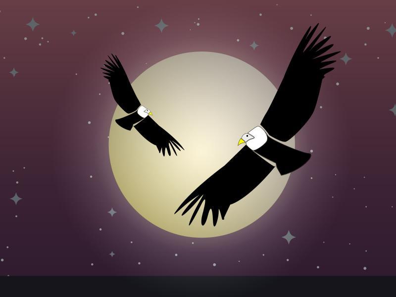 Vulture Backgrounds