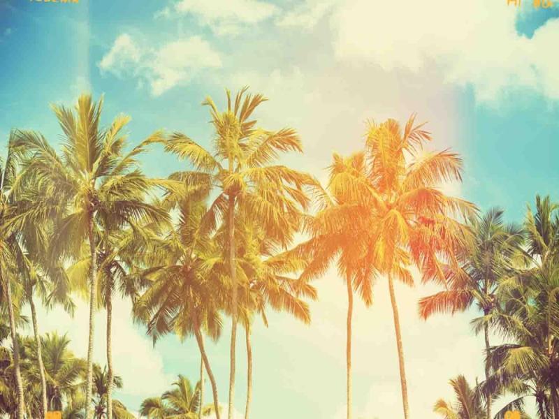 Wallpaper Palm Tree Pale Art Backgrounds