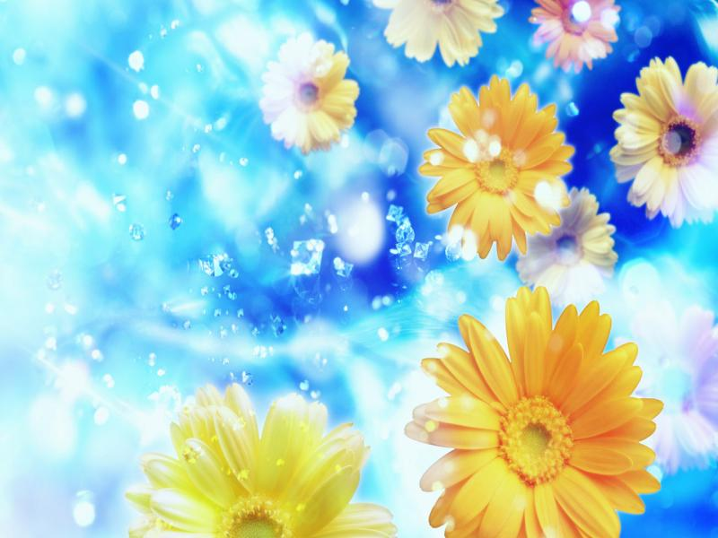 Wallpapers  HD Desktops Free Online Flowers   Art Backgrounds