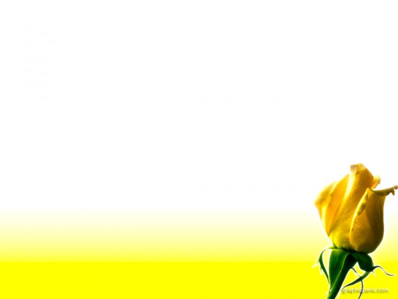 Yellow Rose Flower  WOMENS MINISTRY  Pinterest   image Backgrounds