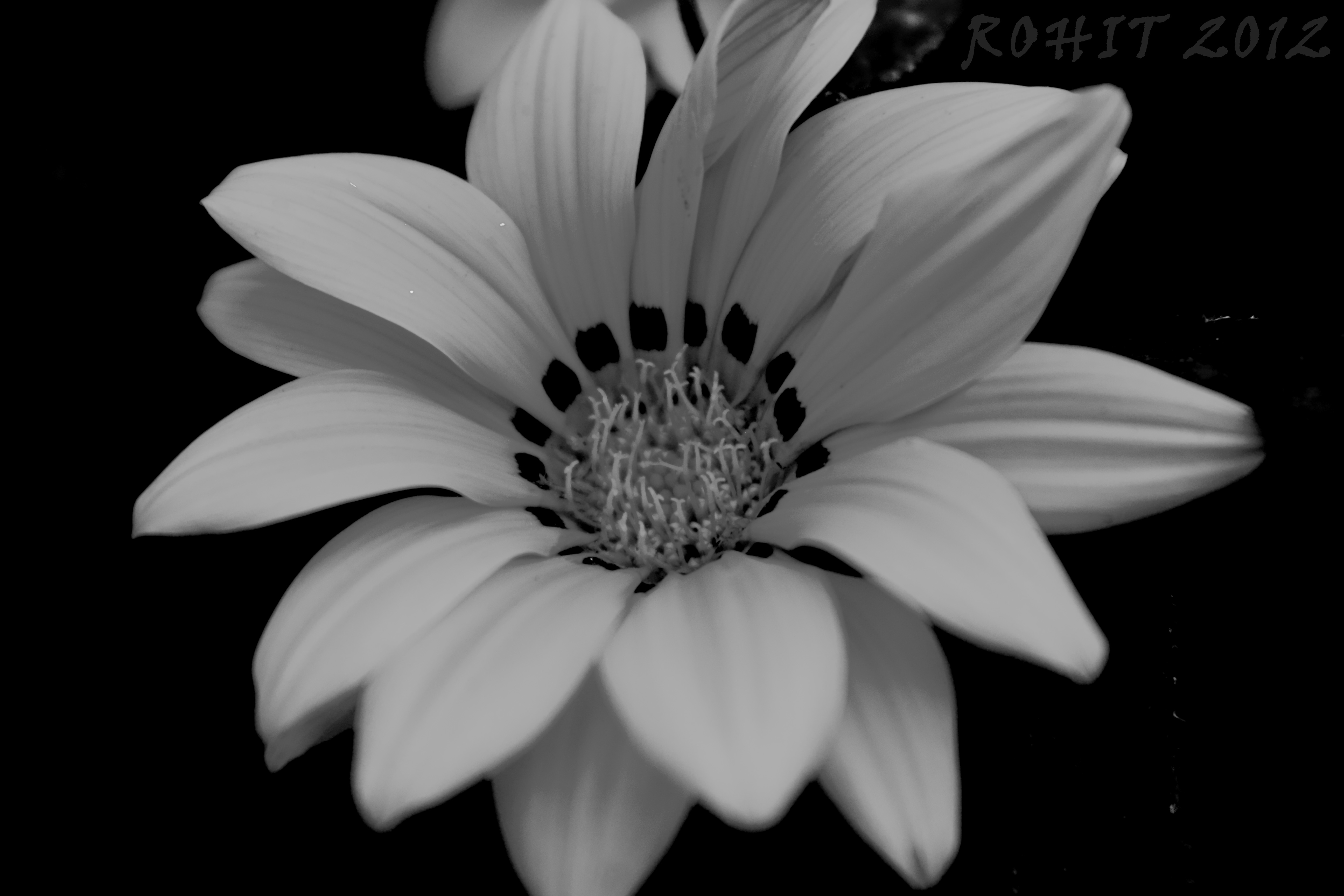 Download Free Black And White Flowers Clip Art Ppt Backgrounds